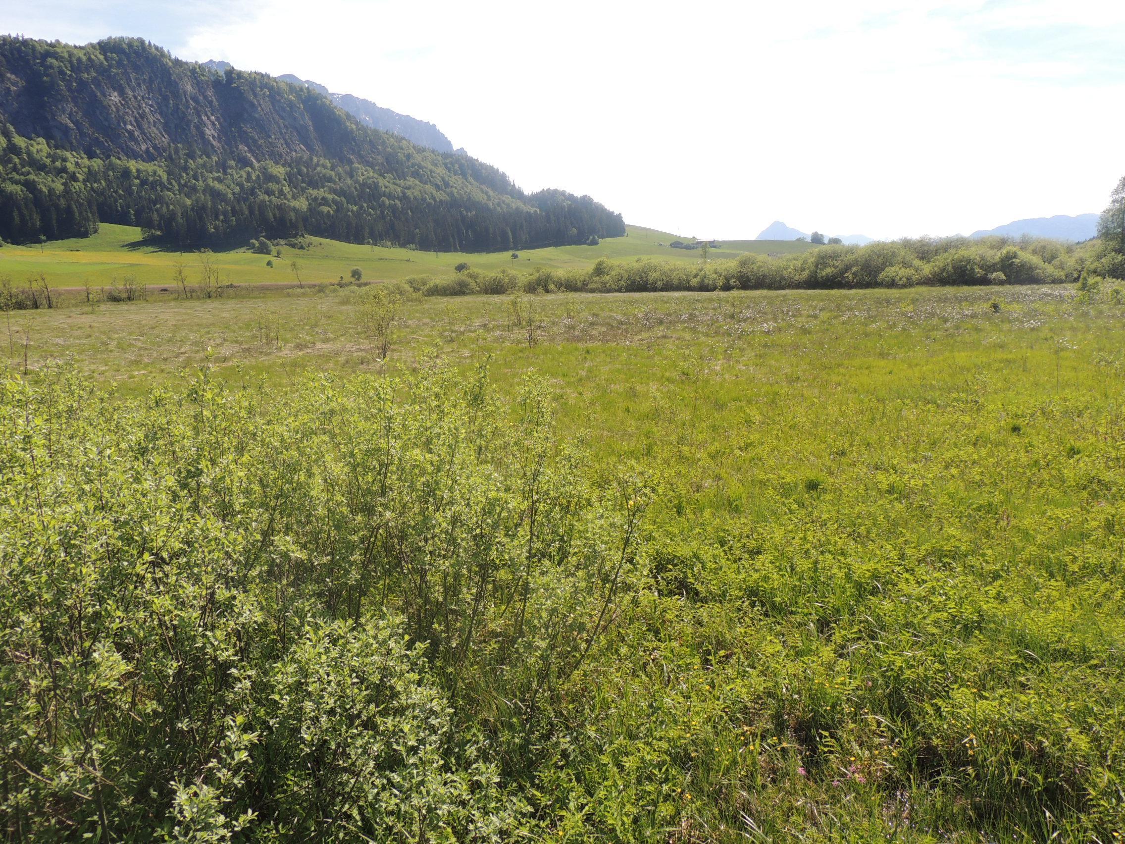 Das Moorgebiet Schwemm