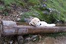 Jasper beim Baden